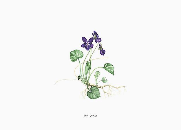 Ароматы в цвете Pantone и явление синестезии (фото 5)