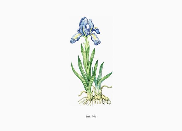 Ароматы в цвете Pantone и явление синестезии (фото 8)