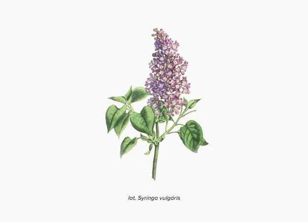 Ароматы в цвете Pantone и явление синестезии (фото 11)