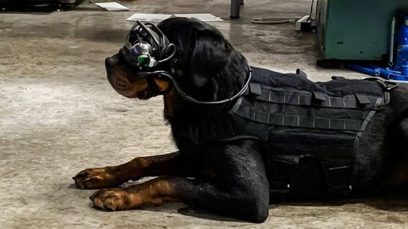 В США появились очки дополненной реальности для собак (фото 1)