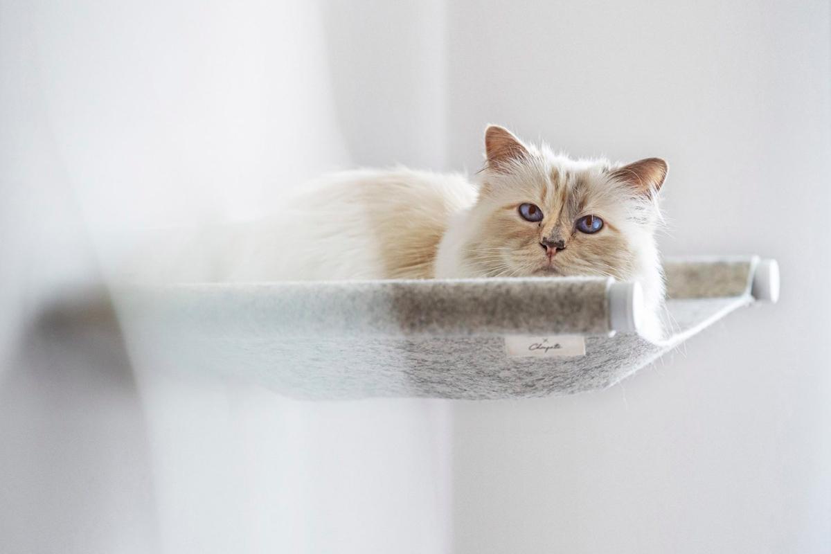 Кошка Карла Лагерфельда сделала коллаборацию с брендом мебели для домашних животных (фото 1)