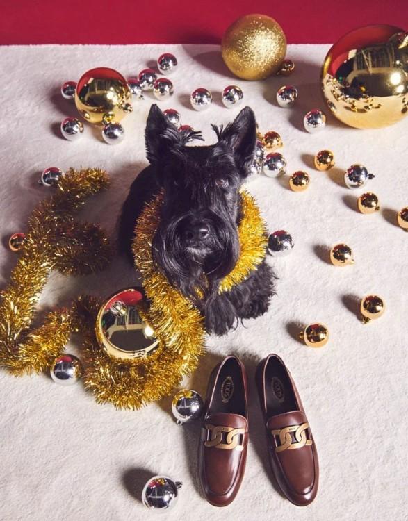 В праздничной кампании Tod's снялись собаки (фото 8)