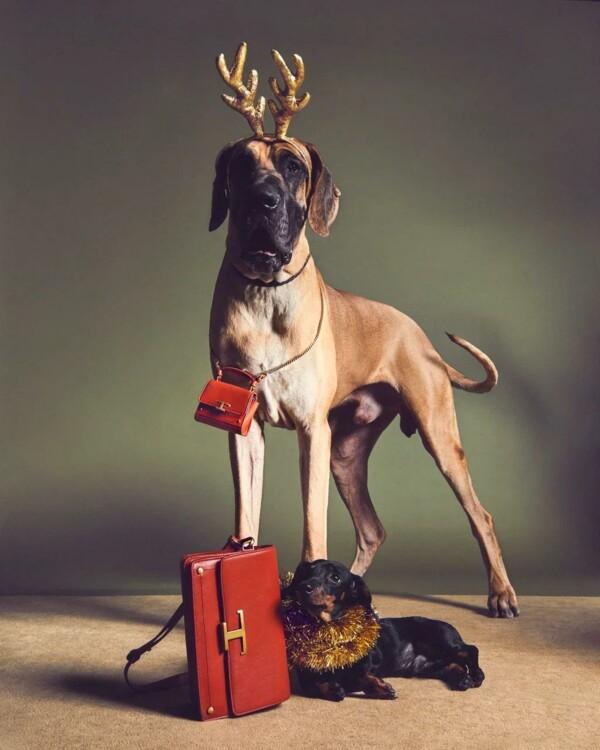 В праздничной кампании Tod's снялись собаки (фото 6)