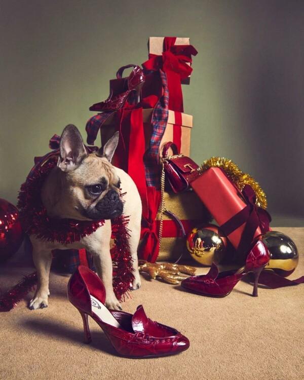 В праздничной кампании Tod's снялись собаки (фото 9)