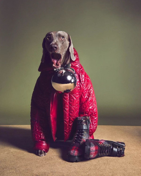 В праздничной кампании Tod's снялись собаки (фото 7)