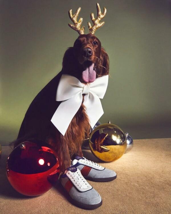 В праздничной кампании Tod's снялись собаки (фото 3)