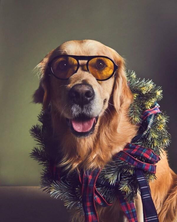 В праздничной кампании Tod's снялись собаки (фото 1)