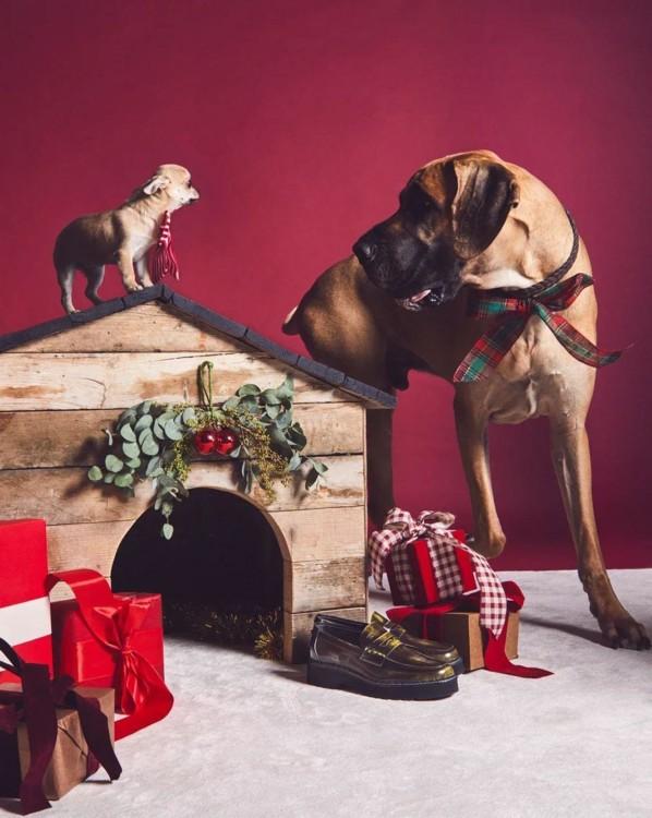 В праздничной кампании Tod's снялись собаки (фото 2)