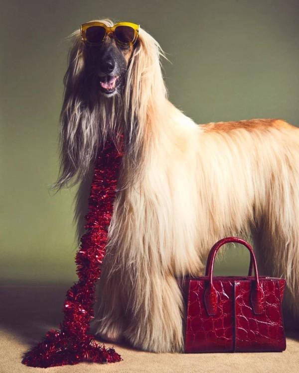 В праздничной кампании Tod's снялись собаки (фото 5)