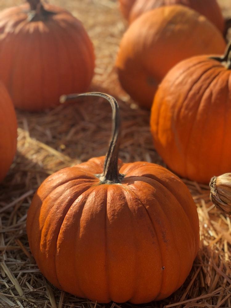 Как полюбить осень: 11 работающих советов (фото 2)