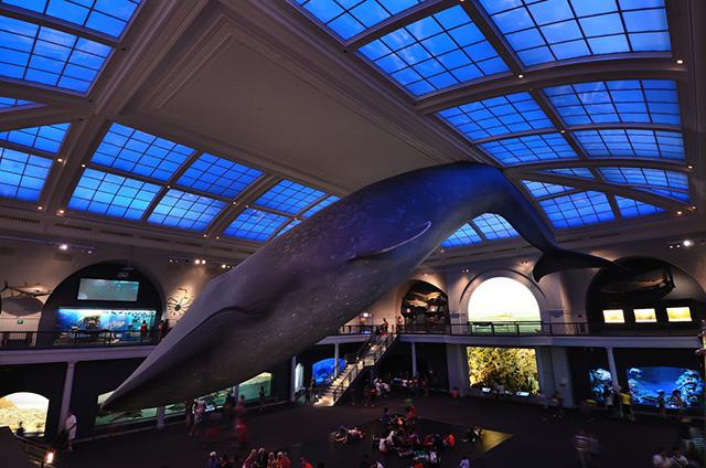 Американский музей естественной истории устроит вечеринку с ночевкой (фото 1)