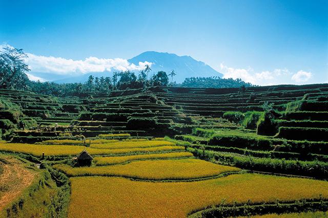 Как отдохнуть на Бали, если у вас всего неделя на отпуск (фото 16)