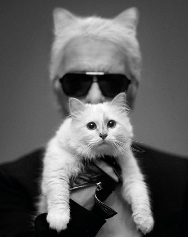 """Кошка Карла Лагерфельда выпускает книгу о своей """"частной жизни"""" (фото 1)"""