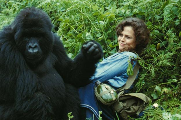 От Марокко до Уганды: кинопутешествие по Африке в 15 фильмах (фото 3)