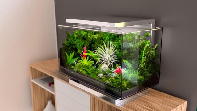 Biopod: тропический лес в маленькой коробке (фото 1)