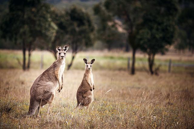 Путевые заметки: Австралия (фото 19)