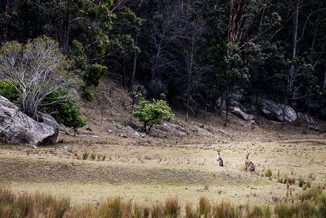 Путевые заметки: Австралия (фото 20)