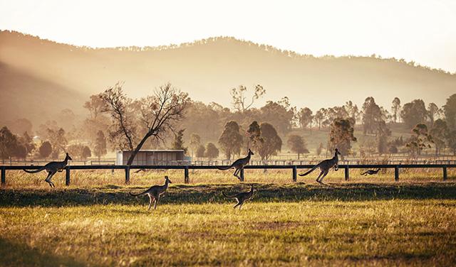 Путевые заметки: Австралия (фото 21)