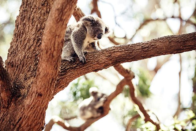 Путевые заметки: Австралия (фото 36)