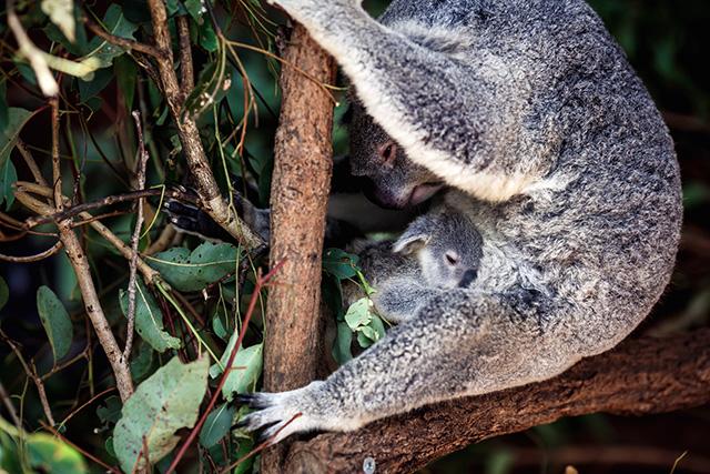 Путевые заметки: Австралия (фото 37)