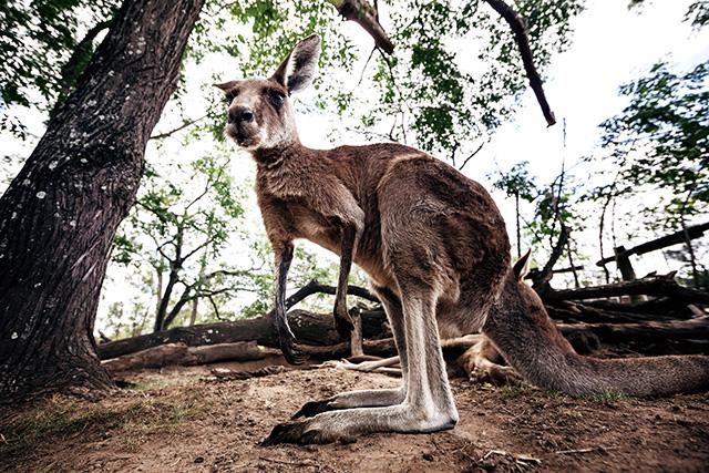 Путевые заметки: Австралия (фото 39)