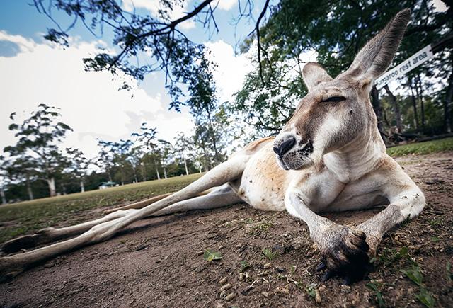 Путевые заметки: Австралия (фото 40)