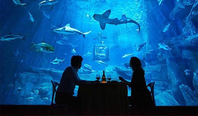 Airbnb предложил поспать с акулами (фото 1)