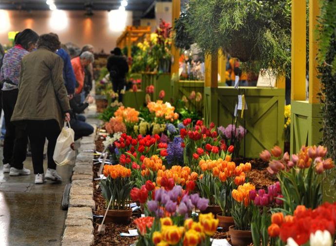 выставка цветов. фото