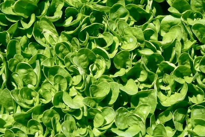 Зеленый шум (фото 3)