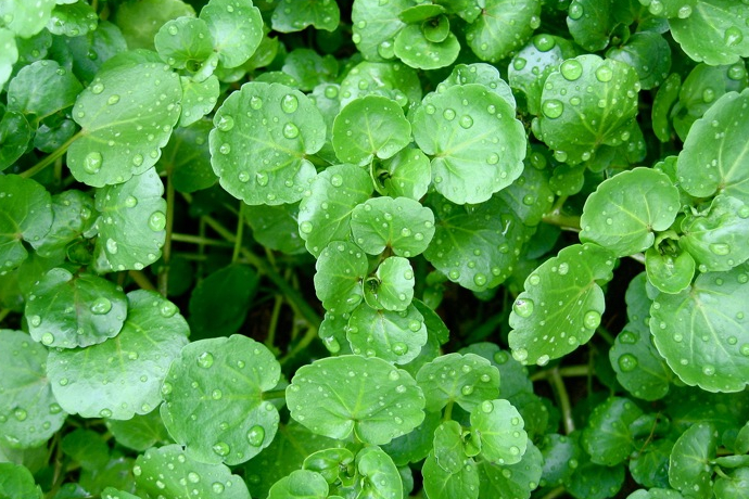 Зеленый шум (фото 2)