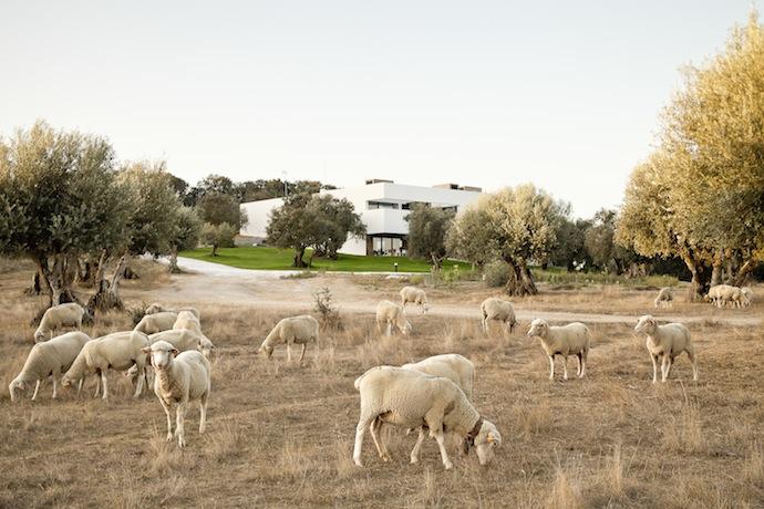 Лаконичная вилла в провинции Алентейо (фото 1)