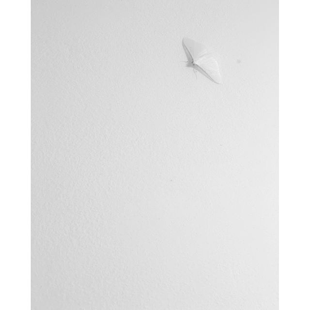 White butterfly on the wall #goodnight