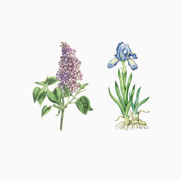 Ароматы в цвете Pantone и явление синестезии