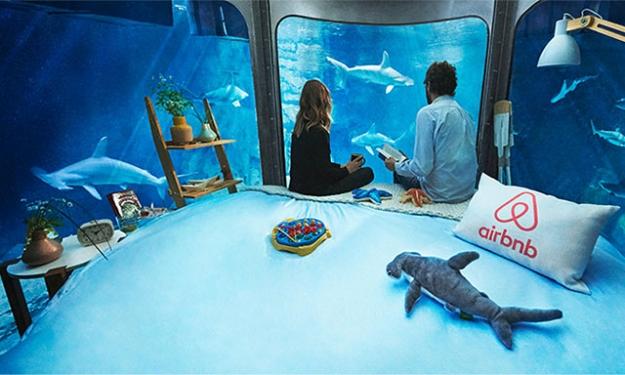 Airbnb предложил поспать с акулами