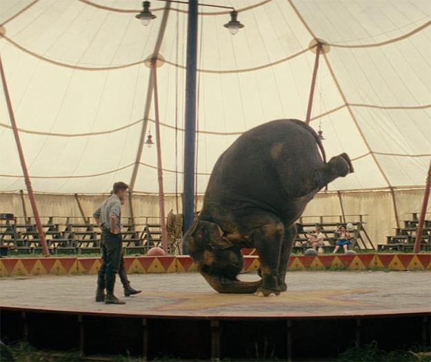 В украинских цирках не будет выступлений с животными