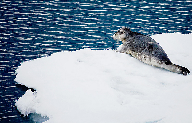 WWF численность животных сократилась вдвое