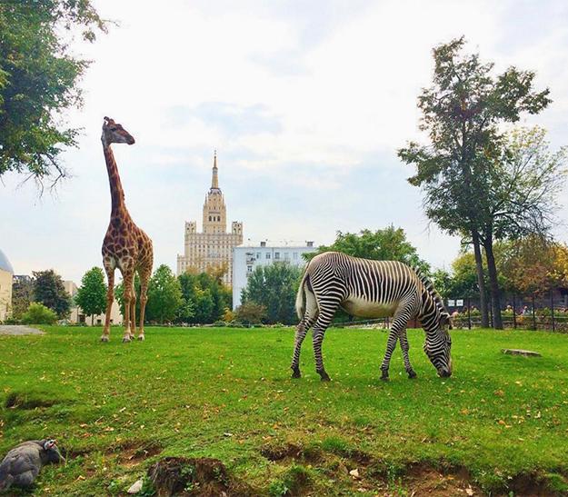 УМосковского зоопарка появится приложение сдополненной реальностью
