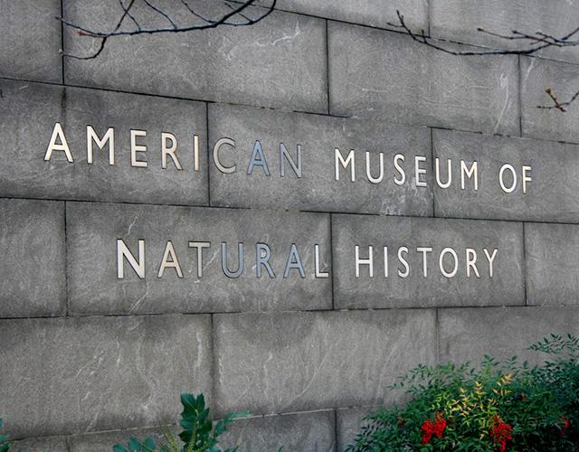 Американский музей естественной истории устроит вечеринку с ночевкой