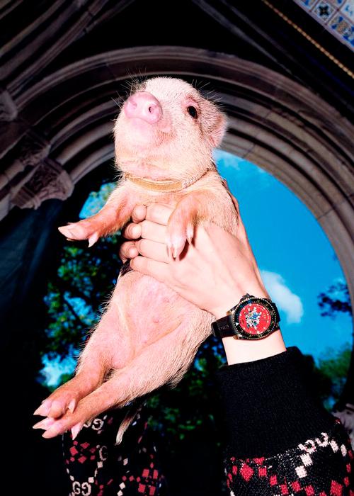 Три поросенка: Gucci сделали съемку со свиньями 4